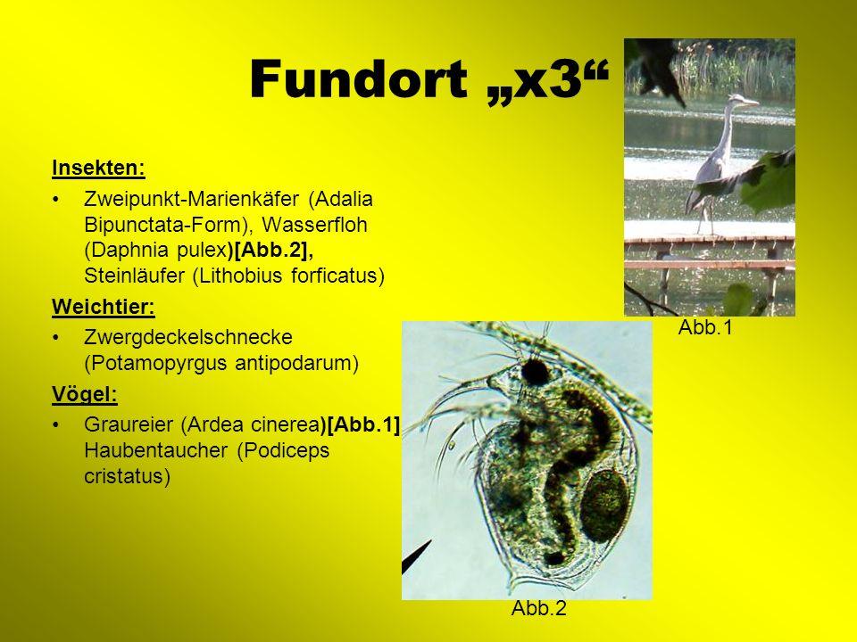 """Fundort """"x3 Insekten: Zweipunkt-Marienkäfer (Adalia Bipunctata-Form), Wasserfloh (Daphnia pulex)[Abb.2], Steinläufer (Lithobius forficatus)"""